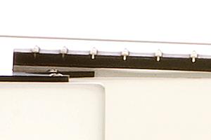 Fingerboard Species